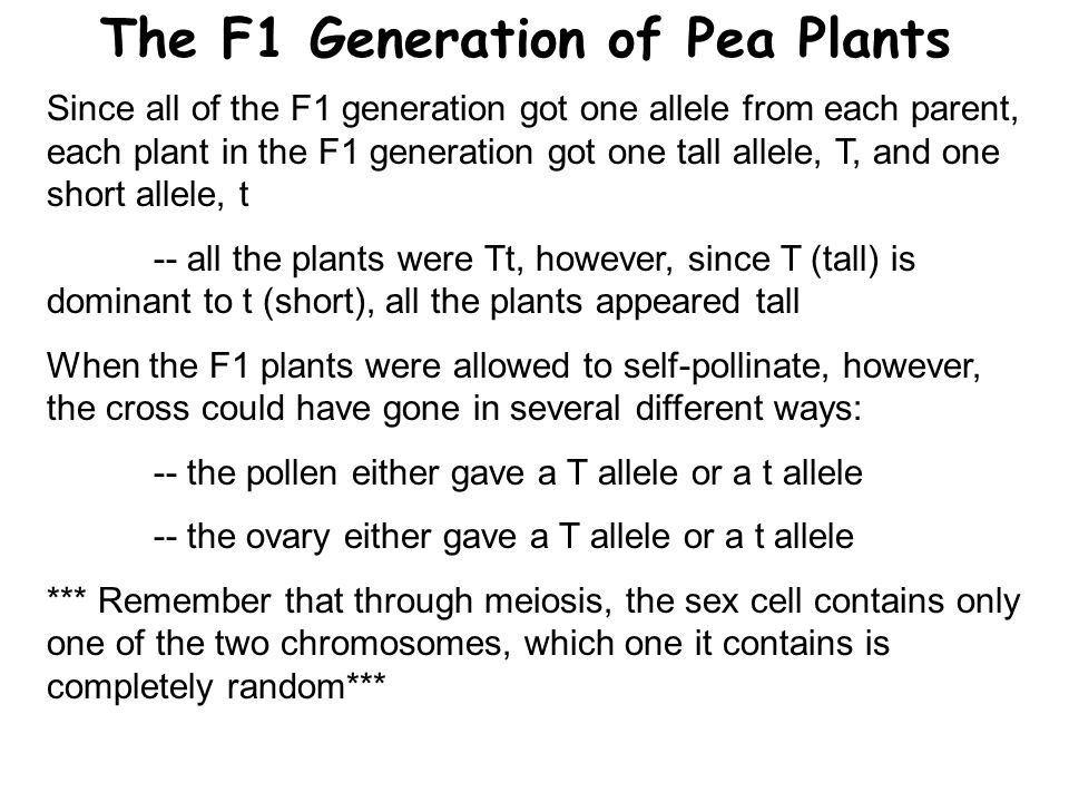 The F1 Generation of Pea Plants