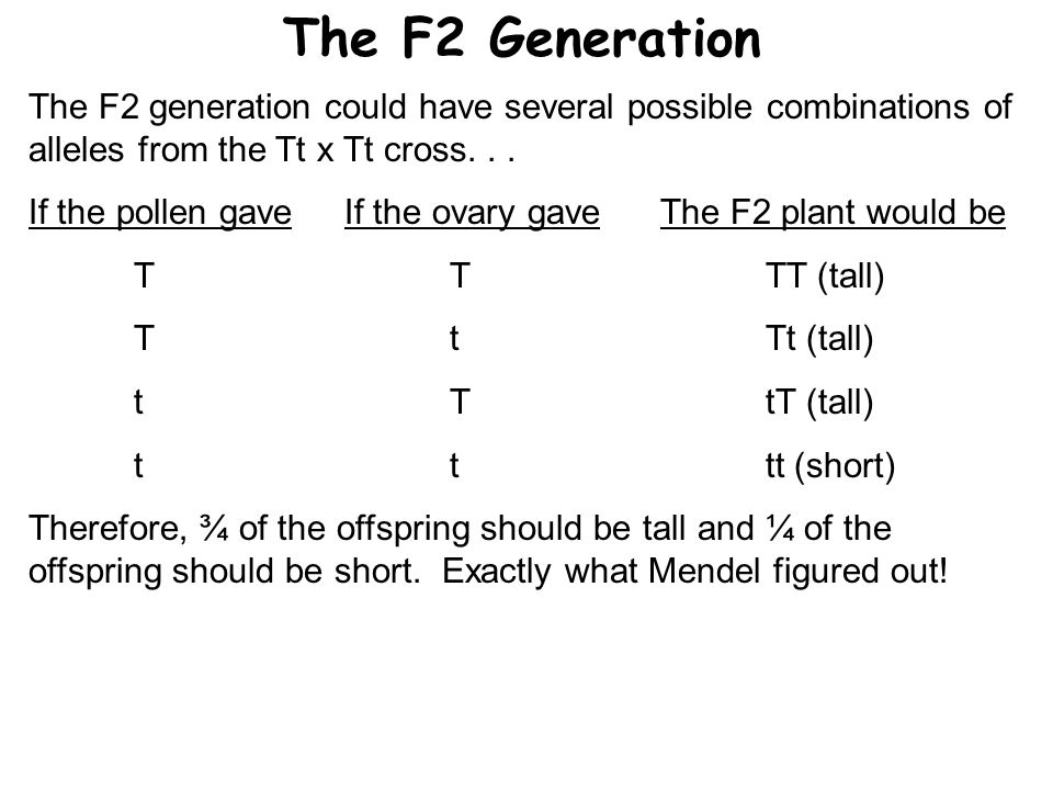 The F2 Generation The F2 generation could have several possible combinations of alleles from the Tt x Tt cross. . .