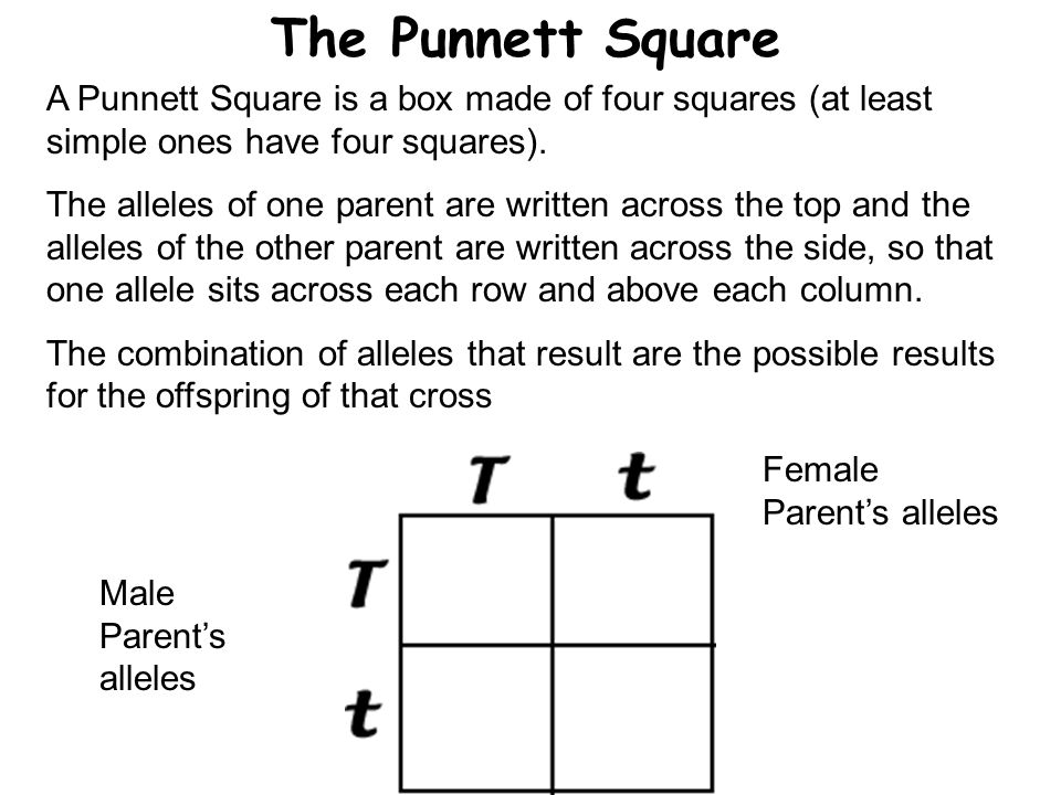 The Punnett Square A Punnett Square is a box made of four squares (at least simple ones have four squares).