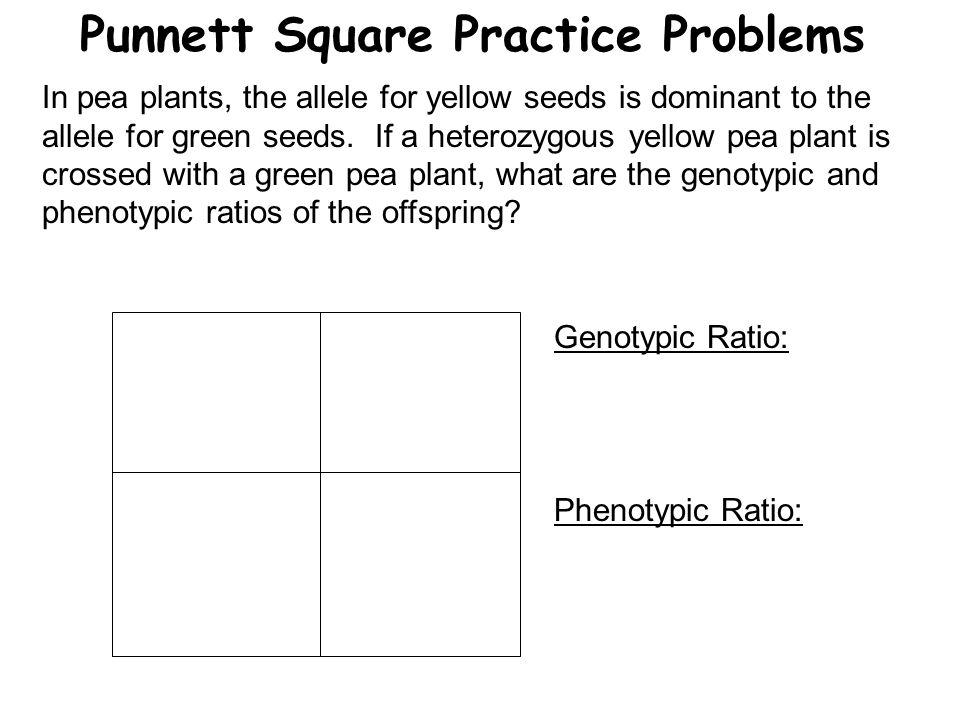 Punnett Square Practice Problems