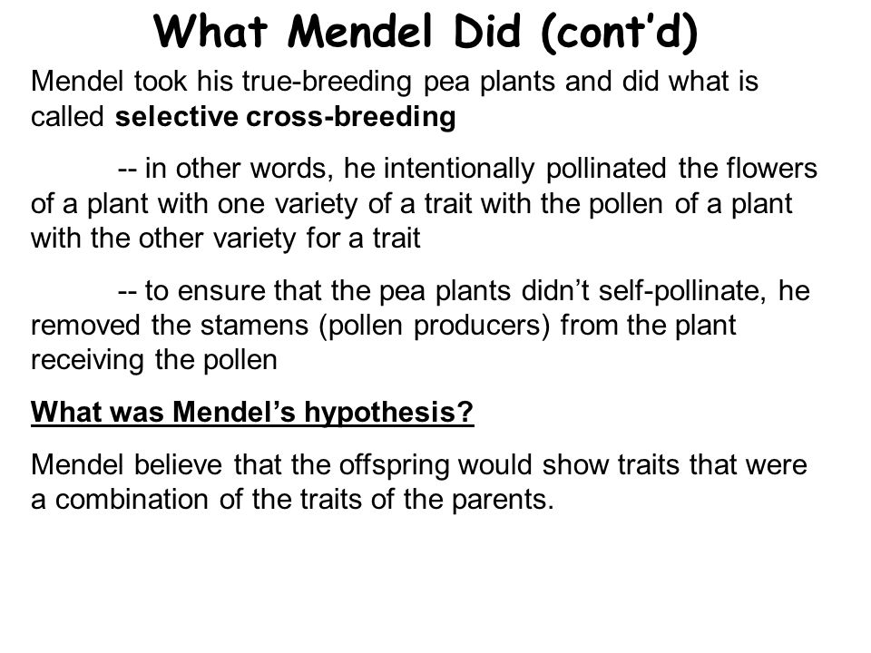 What Mendel Did (cont'd)