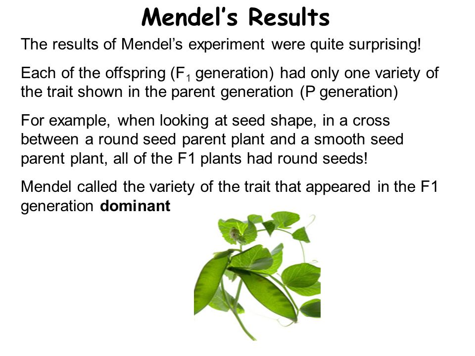 Mendel's Results The results of Mendel's experiment were quite surprising!