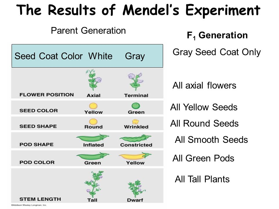 The Results of Mendel's Experiment