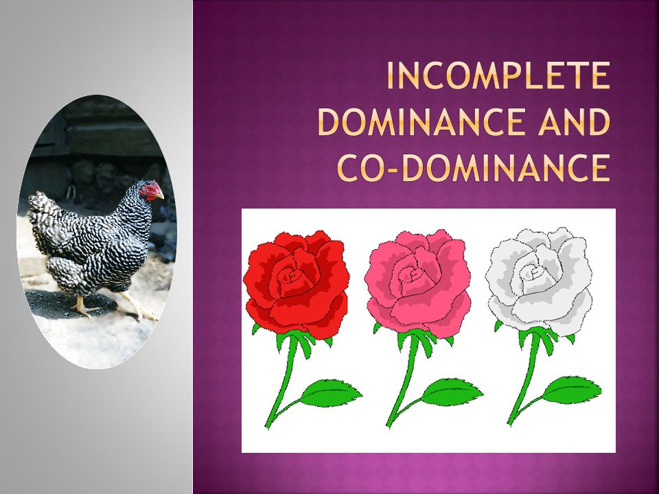 Incomplete Dominance and Co-Dominance