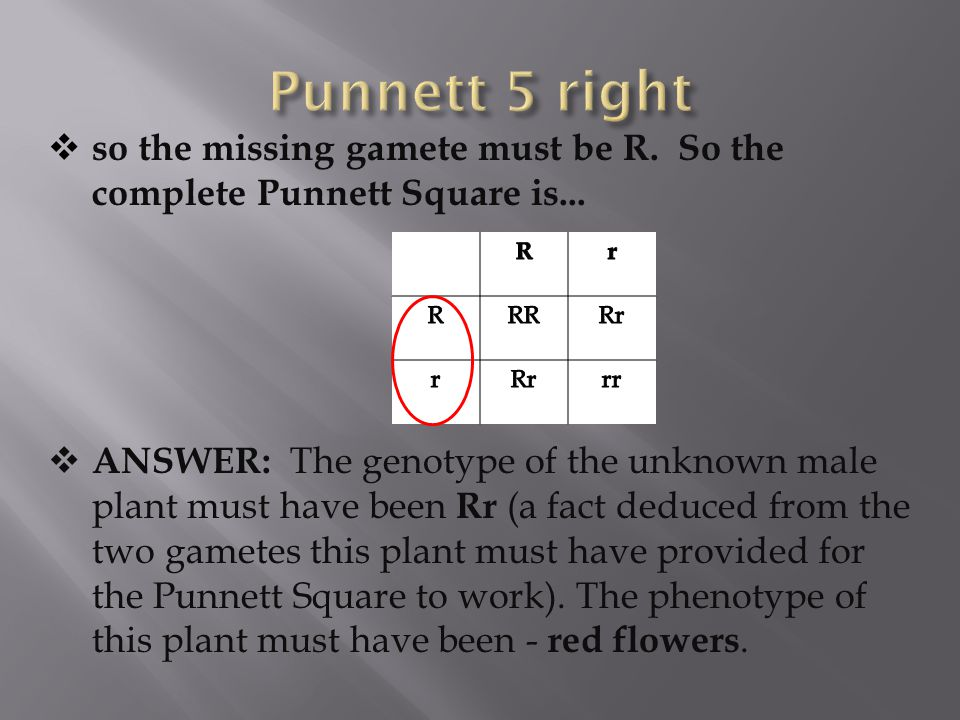 Punnett 5 right so the missing gamete must be R. So the complete Punnett Square is...