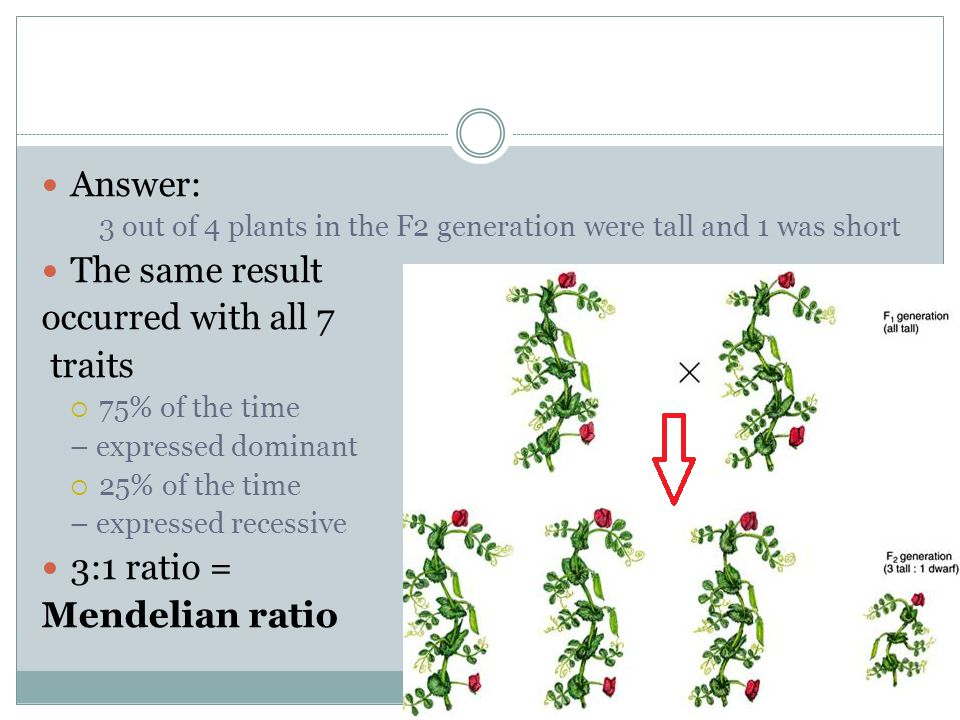 Answer: The same result occurred with all 7 traits 3:1 ratio =