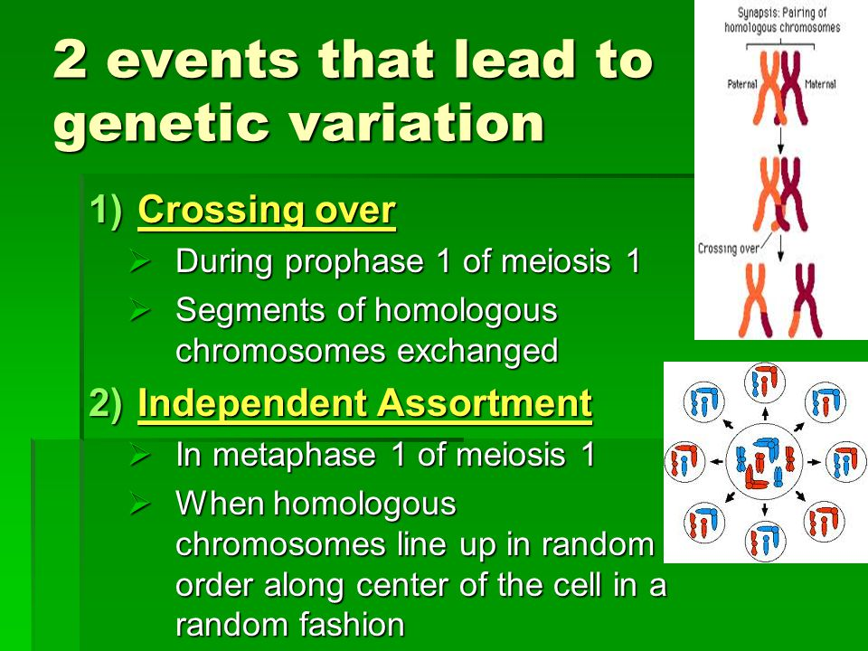 2 events that lead to genetic variation