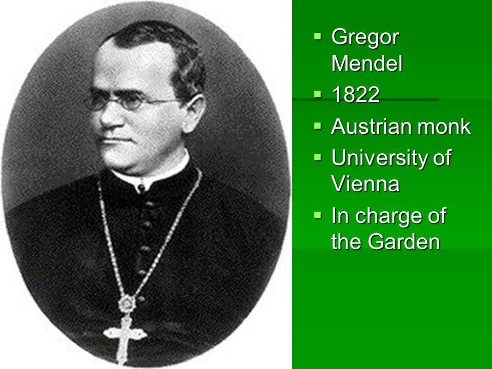 Gregor Mendel 1822 Austrian monk University of Vienna In charge of the Garden