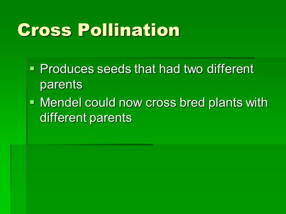 Cross Pollination Produces seeds that had two different parents