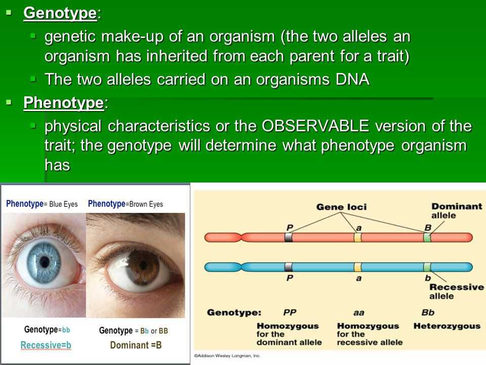 Makeup Ideas » Genetic Makeup Of An Organism - Beautiful Makeup ...