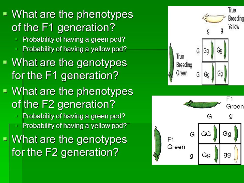 What are the phenotypes of the F1 generation