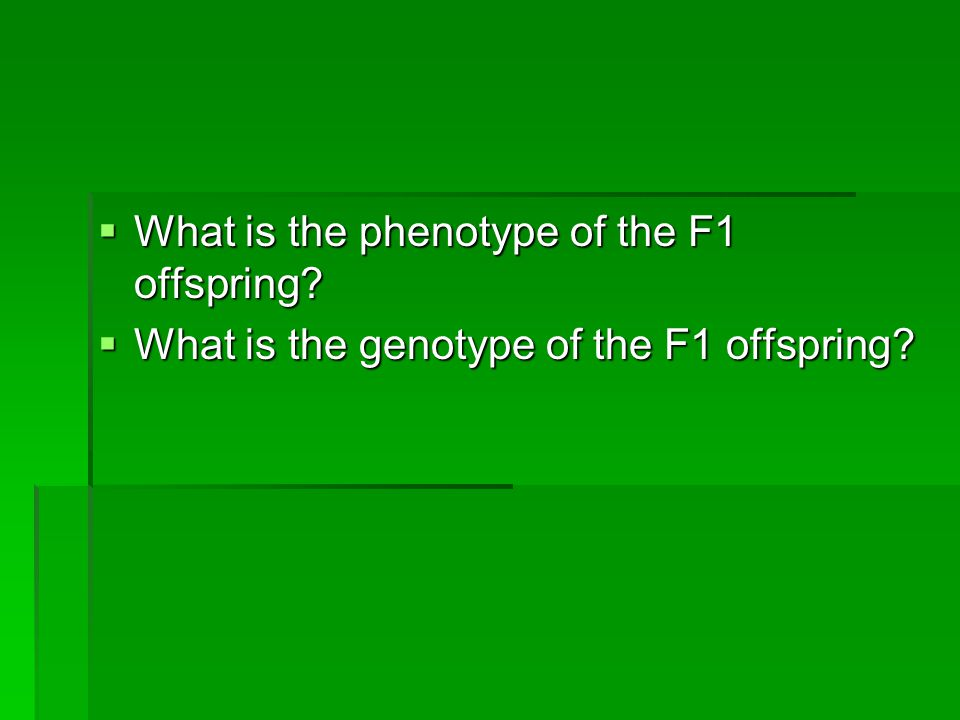 What is the phenotype of the F1 offspring