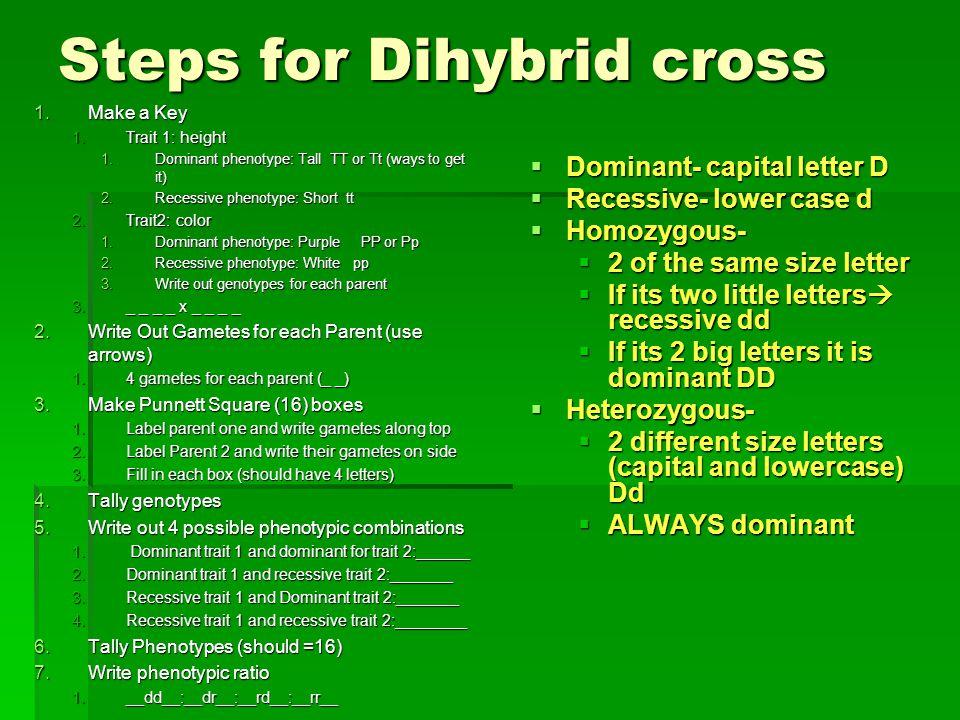Steps for Dihybrid cross