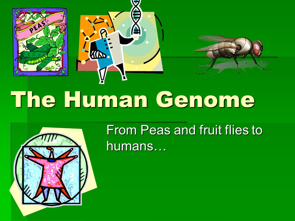 From Peas and fruit flies to humans…