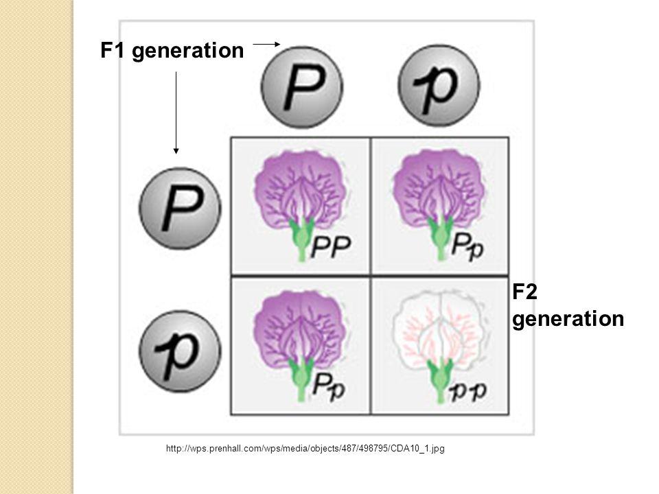 F1 generation F2 generation