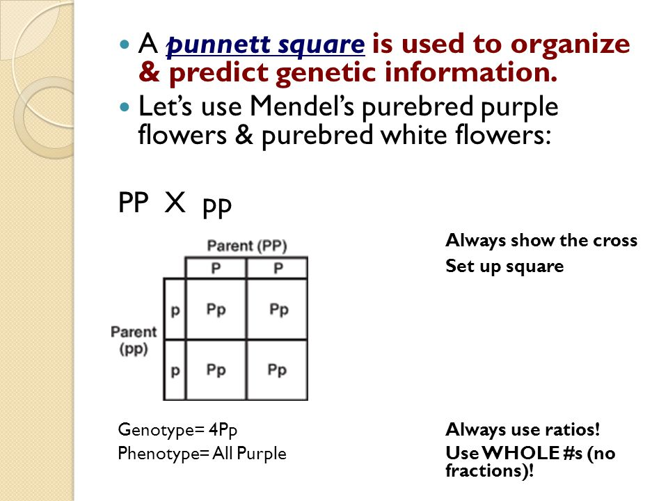 A punnett square is used to organize & predict genetic information.