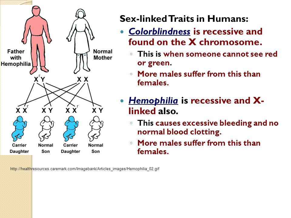 Sex-linked Traits in Humans: