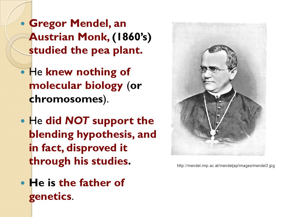 gregor mendel austrian monk Gregor mendel was an austrian monk who lived in the 1800s mendel is known as the father of modern genetics as a result of discovering two important laws - 8898677.