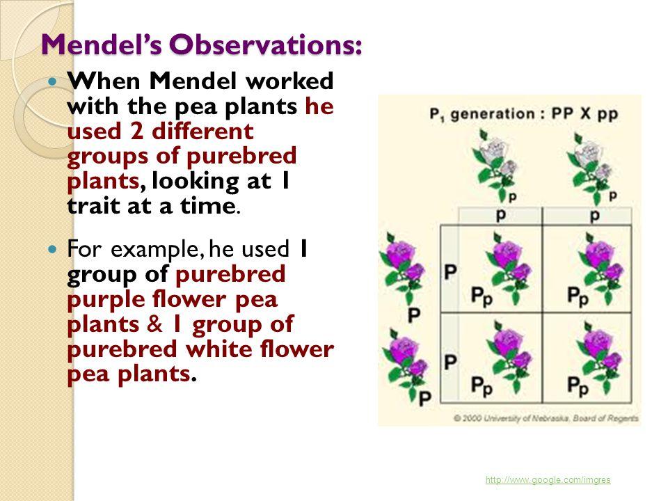 Mendel's Observations: