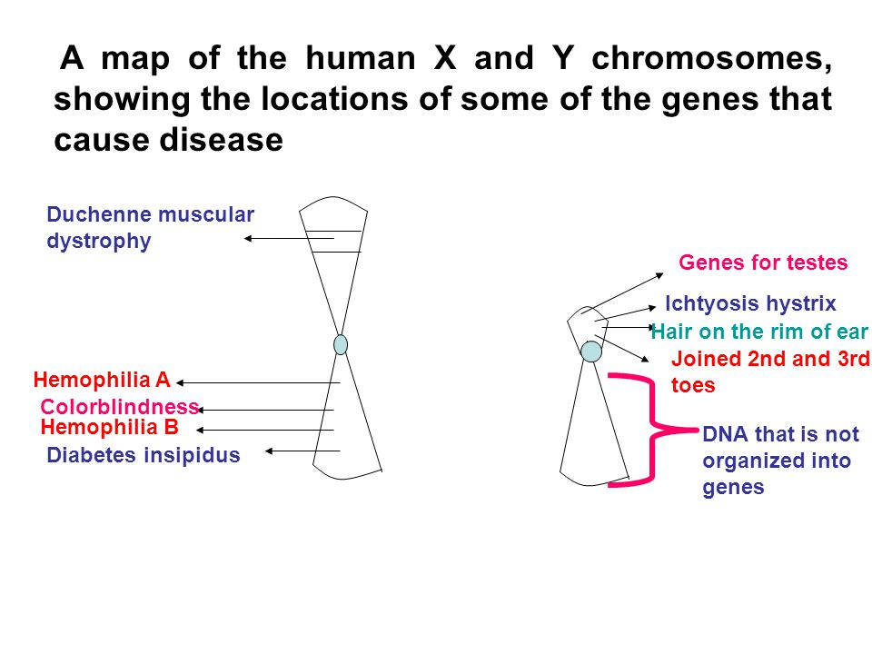 A map of the human X and Y chromosomes, showing the locations of some of the genes that cause disease
