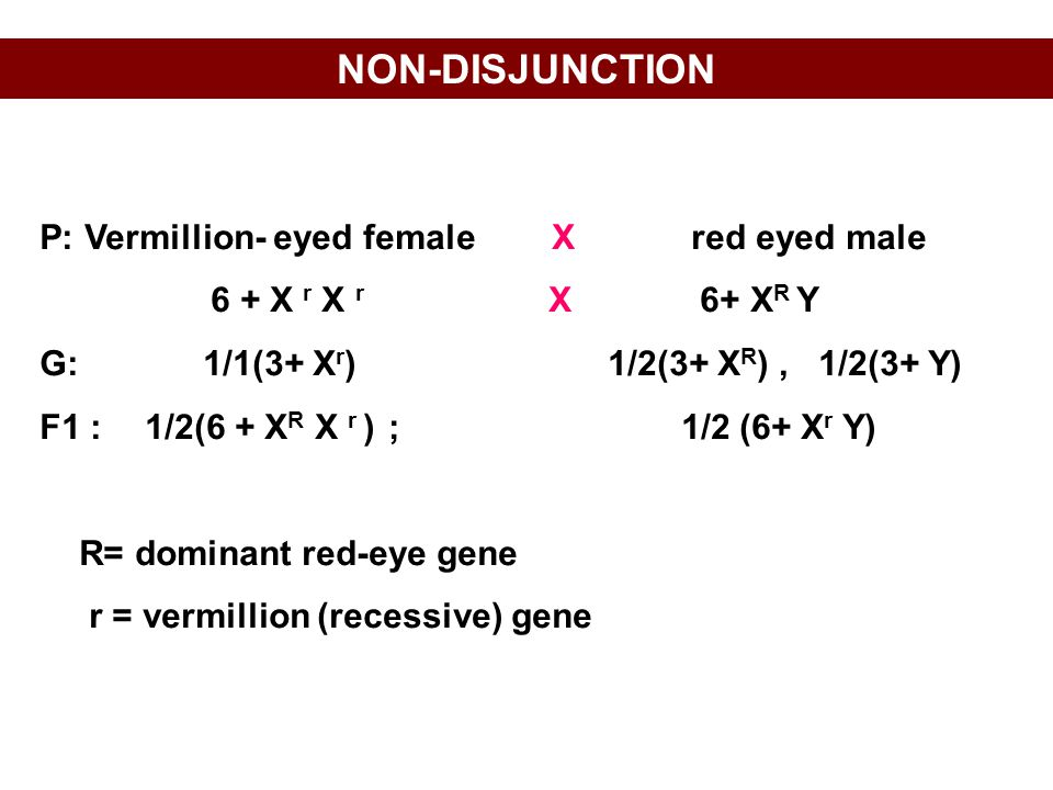 NON-DISJUNCTION P: Vermillion- eyed female X red eyed male