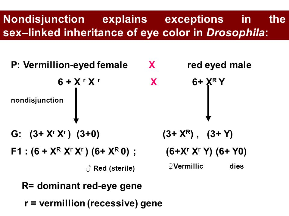 Nondisjunction explains exceptions in the sex–linked inheritance of eye color in Drosophila: