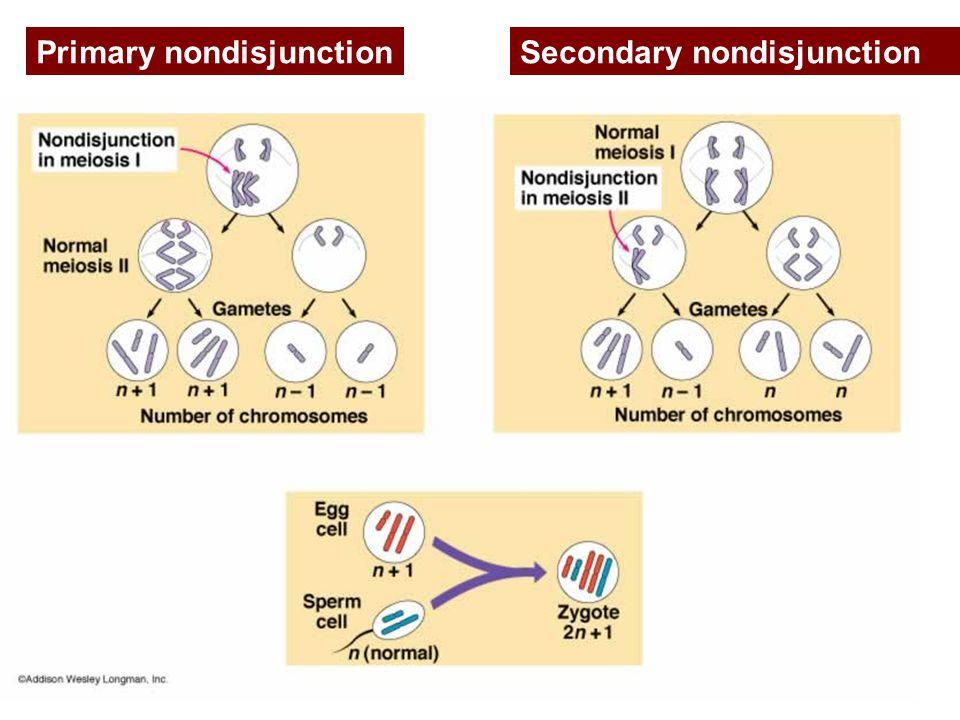 Primary nondisjunction