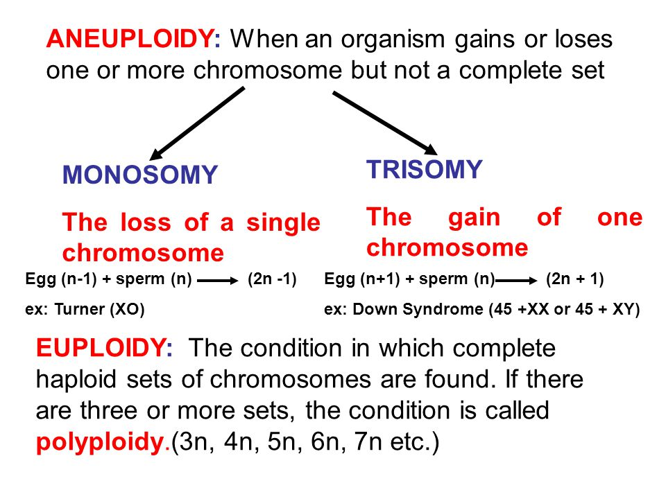 The gain of one chromosome MONOSOMY The loss of a single chromosome