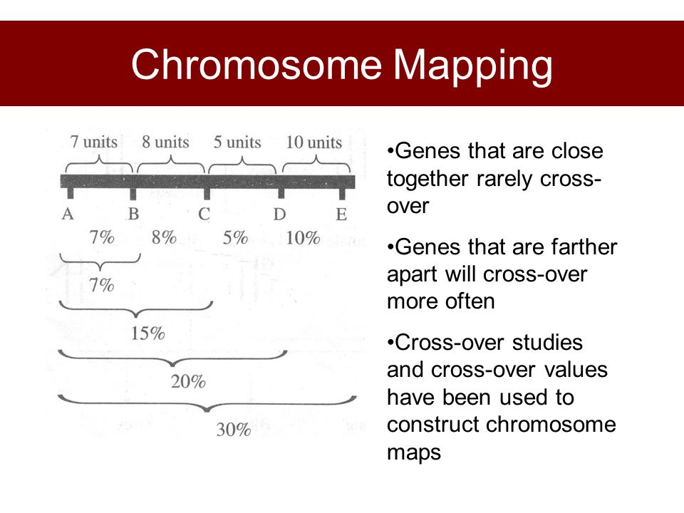 Chromosome Mapping Genes that are close together rarely cross-over