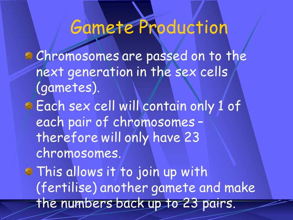 Gamete Production Chromosomes are passed on to the next generation in the sex cells (gametes).