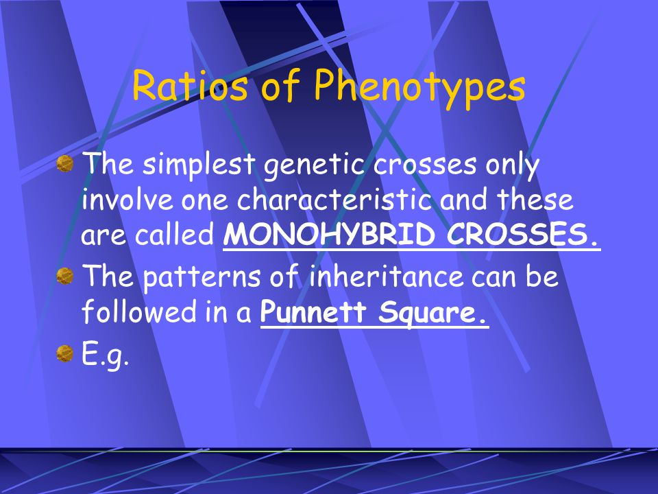 Ratios of Phenotypes The simplest genetic crosses only involve one characteristic and these are called MONOHYBRID CROSSES.