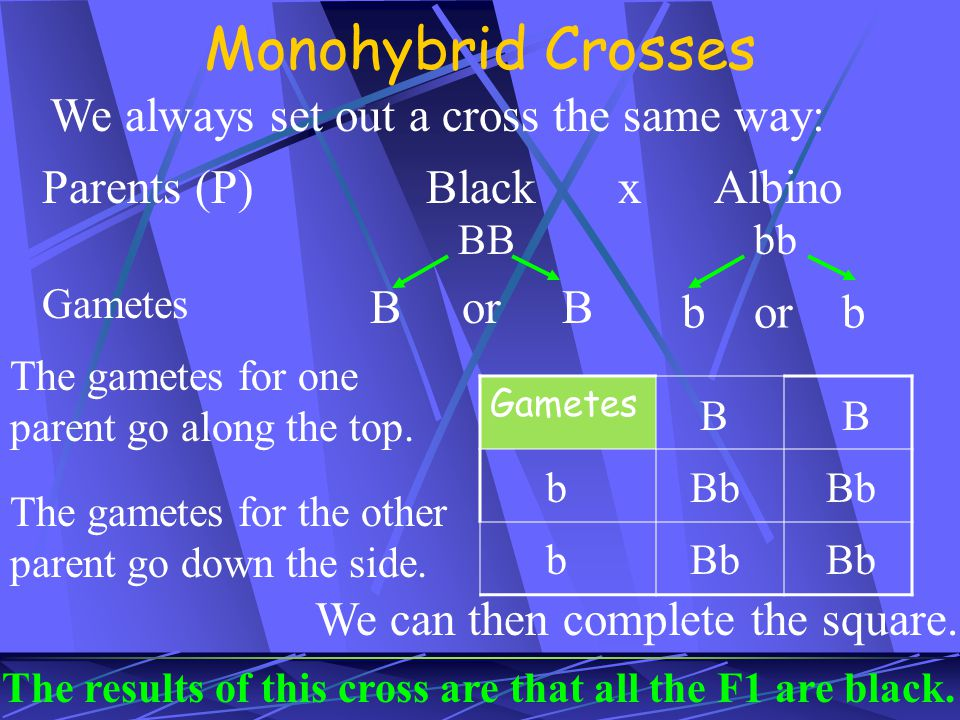 Monohybrid Crosses We always set out a cross the same way:
