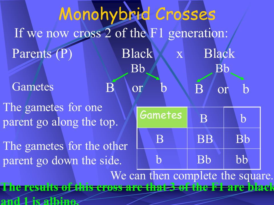 Monohybrid Crosses If we now cross 2 of the F1 generation: