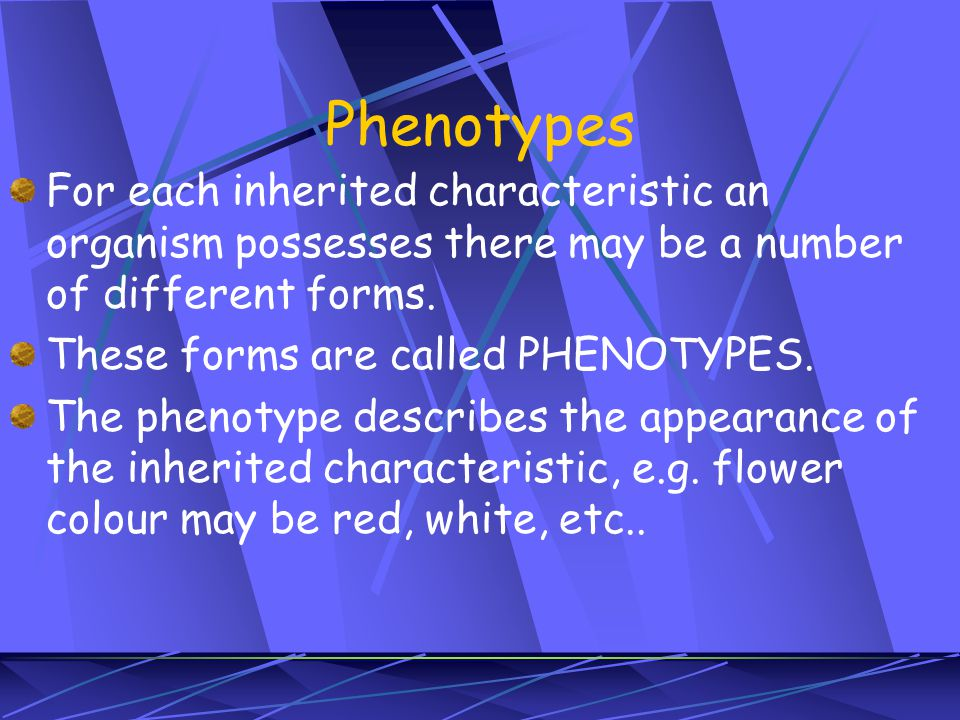 Phenotypes For each inherited characteristic an organism possesses there may be a number of different forms.