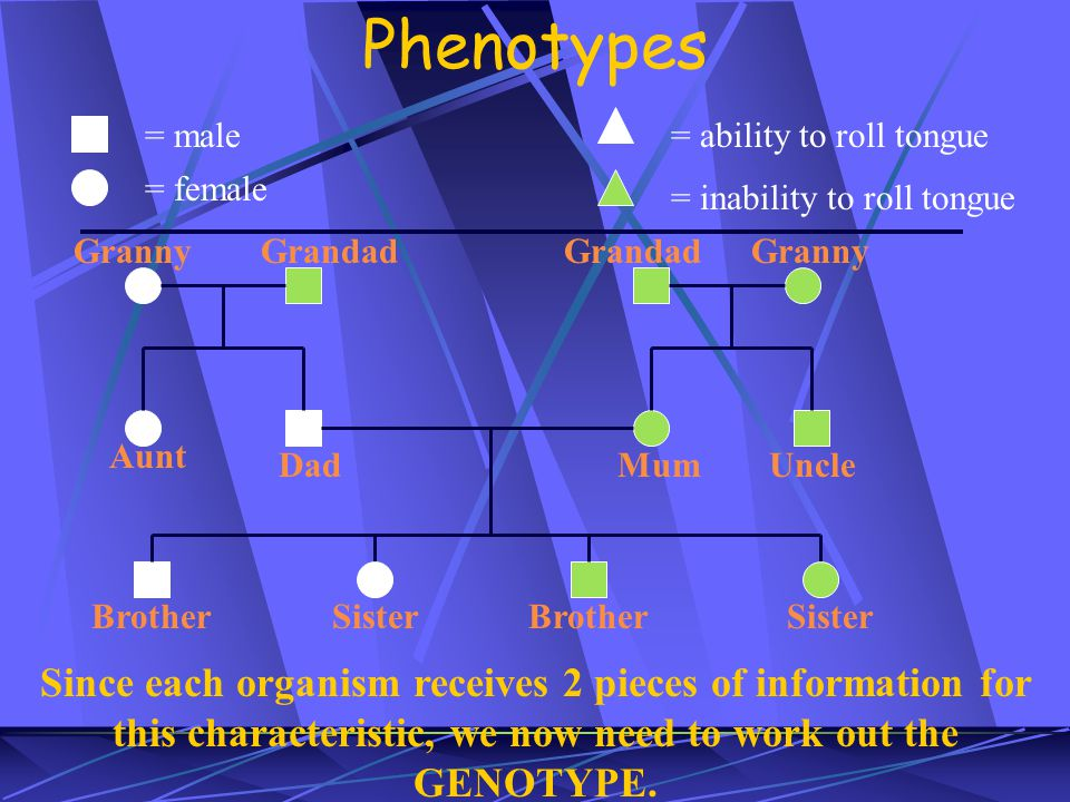 Phenotypes = male. = female. = ability to roll tongue. = inability to roll tongue. Granny. Grandad.