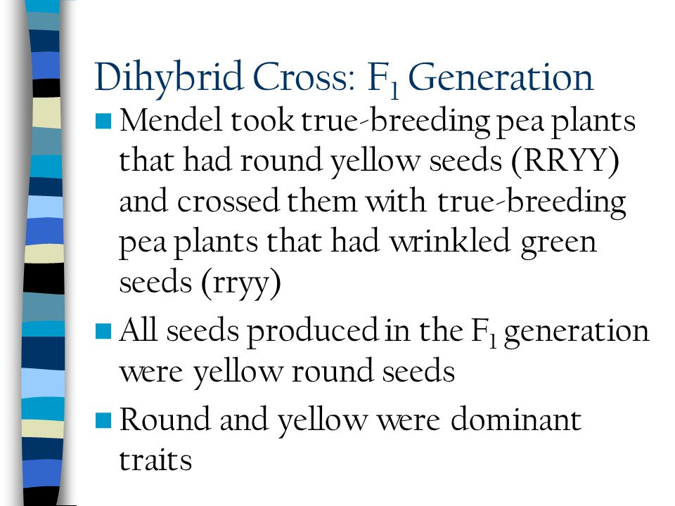 Dihybrid Cross: F1 Generation