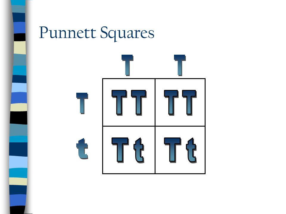 Punnett Squares T T TT TT T t Tt Tt