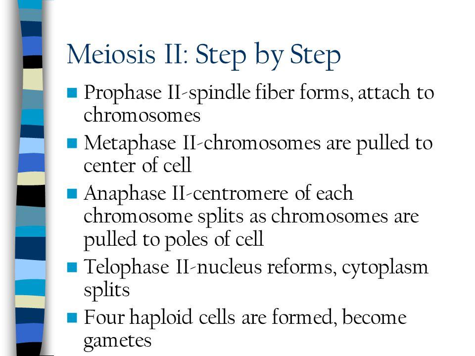 Meiosis II: Step by Step
