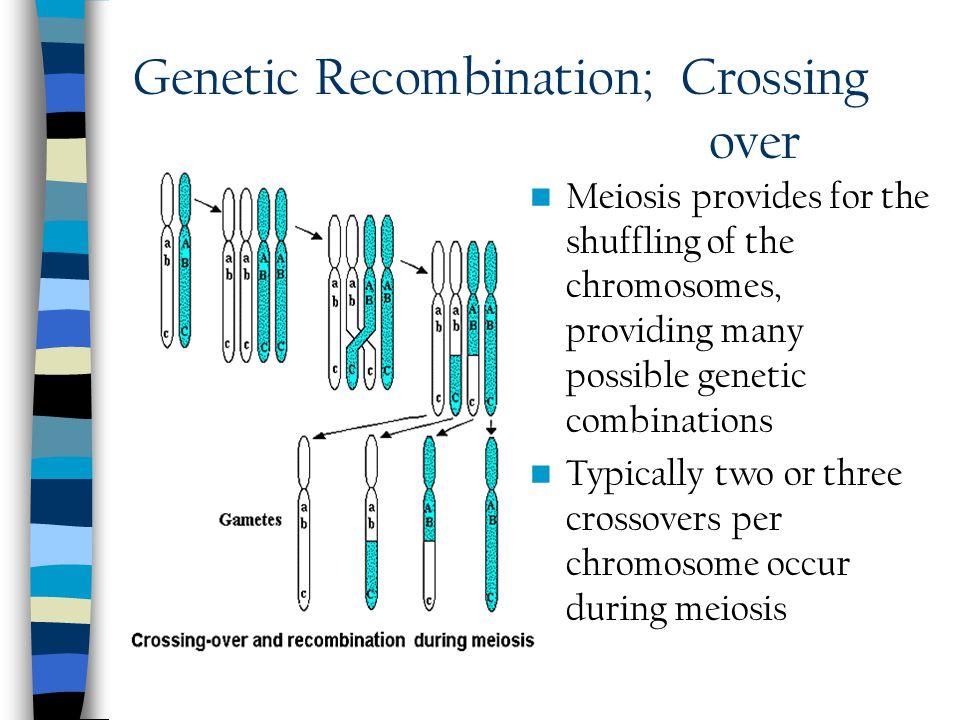 Genetic Recombination; Crossing over