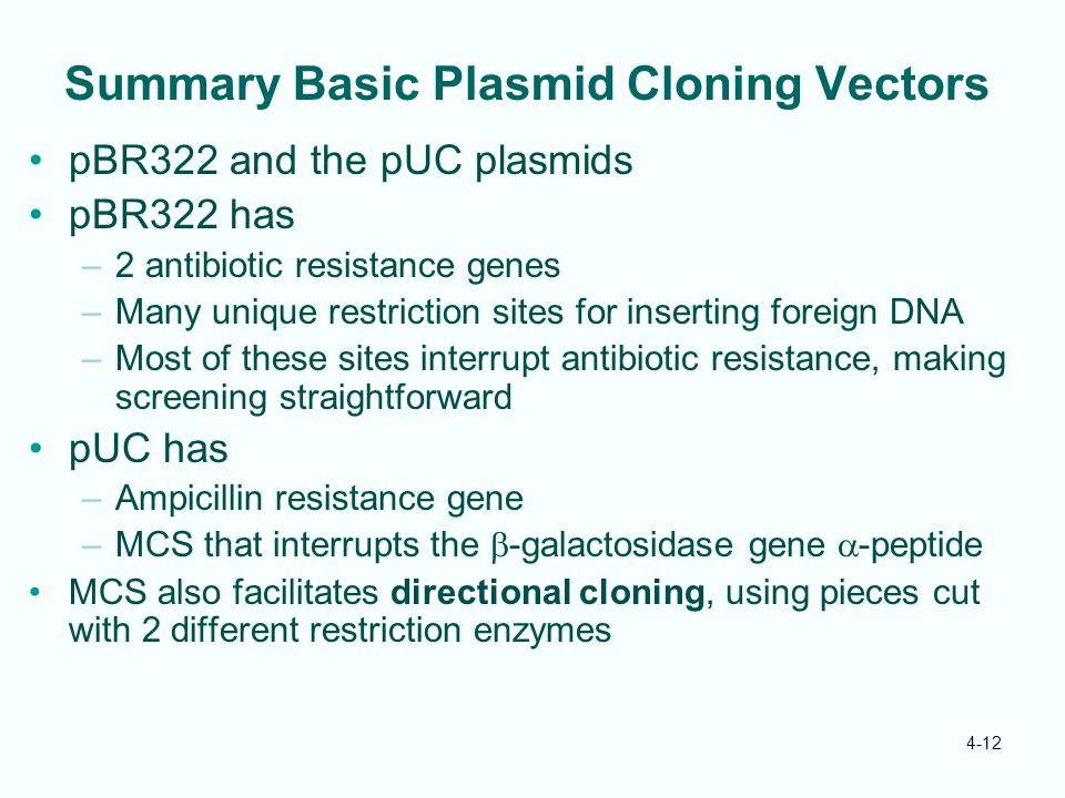 Summary Basic Plasmid Cloning Vectors