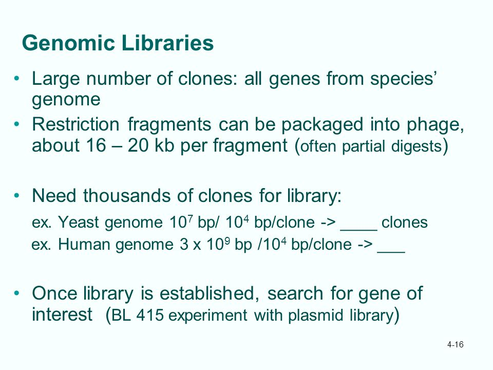 Genomic Libraries Large number of clones: all genes from species' genome.