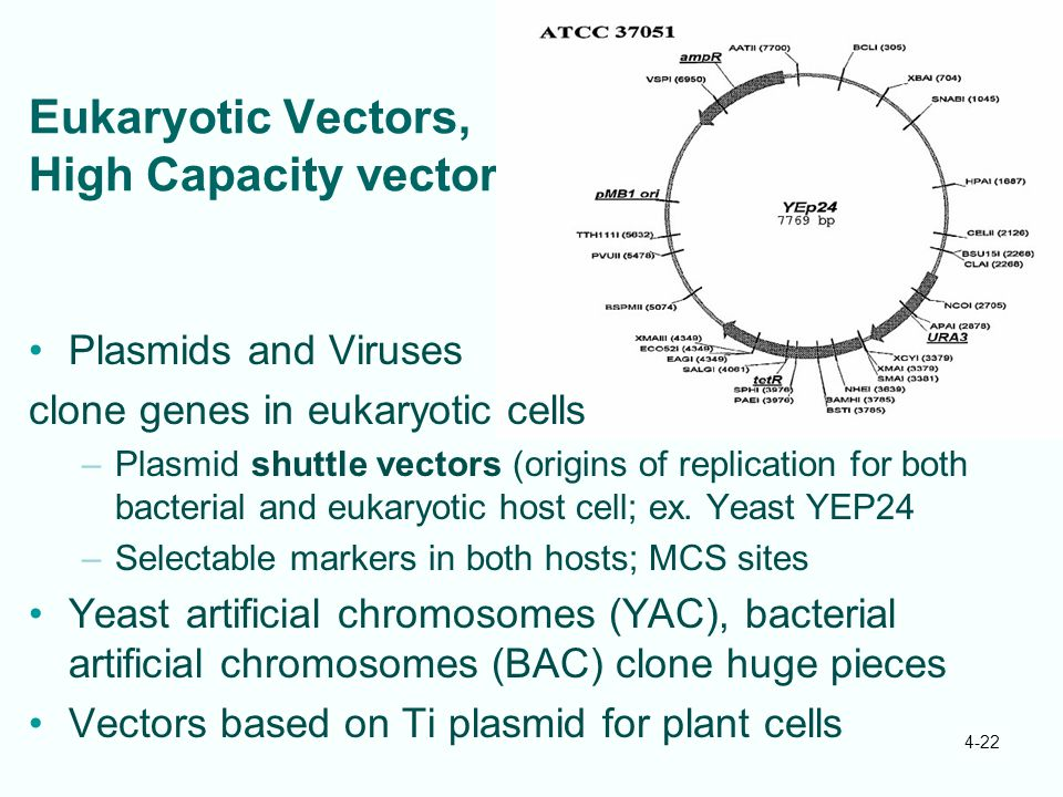 Eukaryotic Vectors, High Capacity vectors