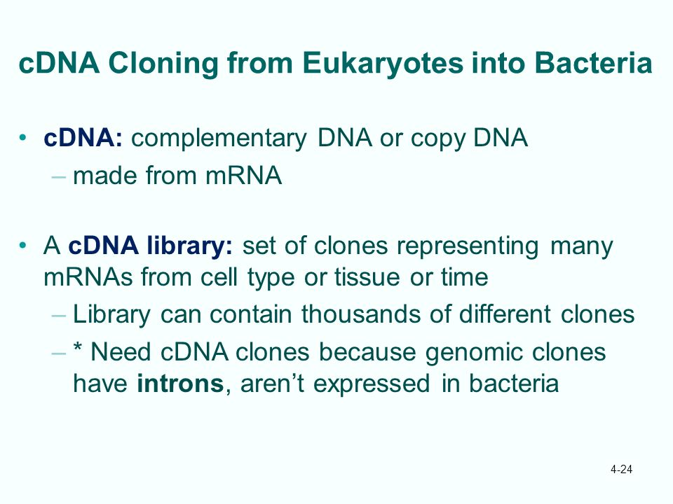 cDNA Cloning from Eukaryotes into Bacteria
