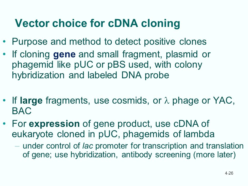 Vector choice for cDNA cloning