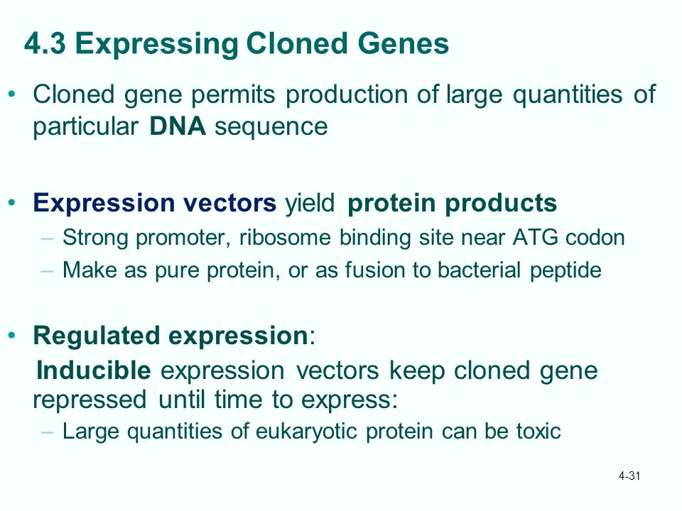 4.3 Expressing Cloned Genes