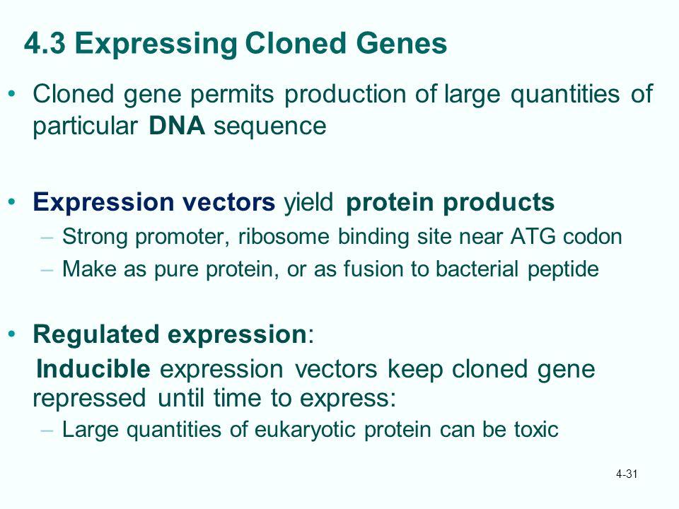 4.3 Expressing Cloned Genes