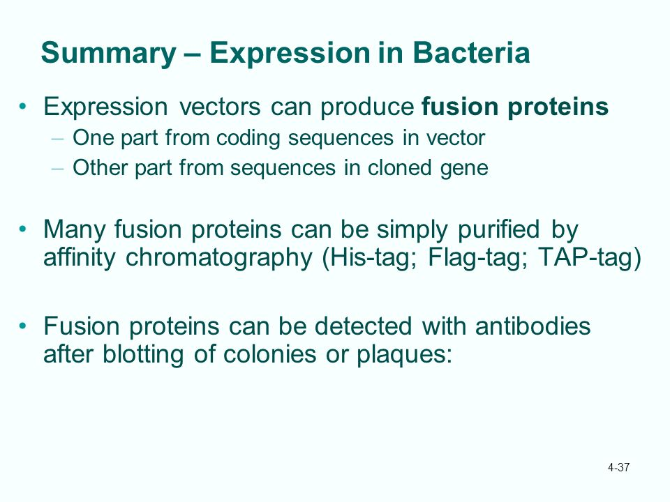 Summary – Expression in Bacteria