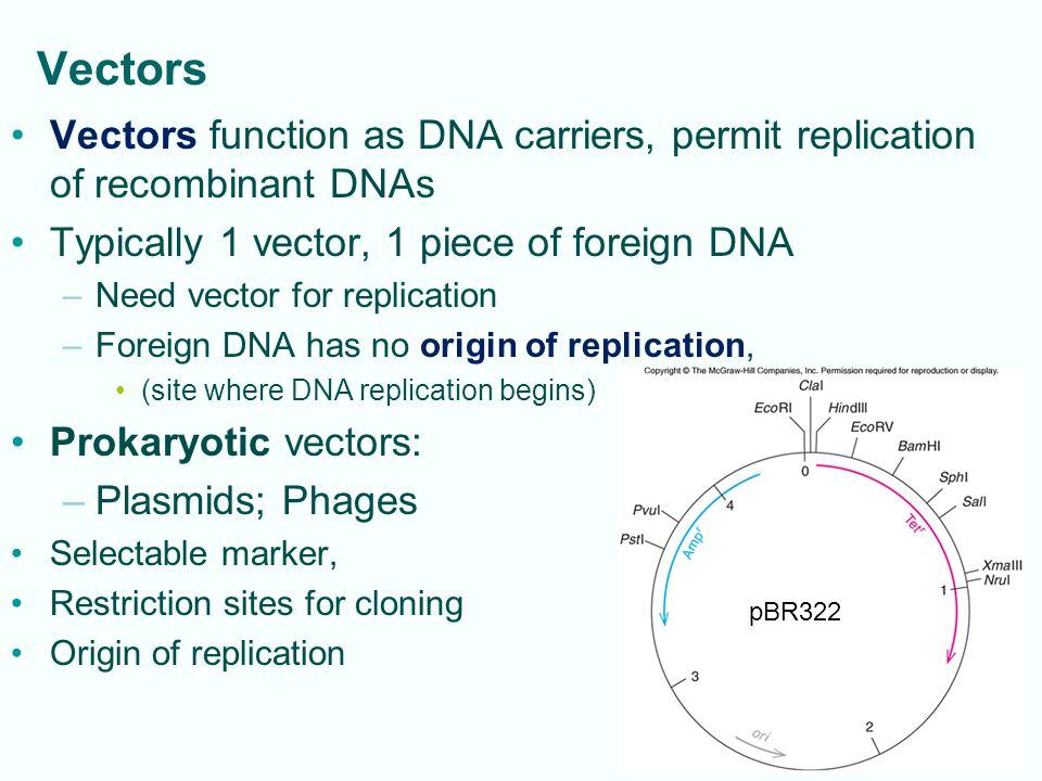 Vectors Vectors function as DNA carriers, permit replication of recombinant DNAs. Typically 1 vector, 1 piece of foreign DNA.