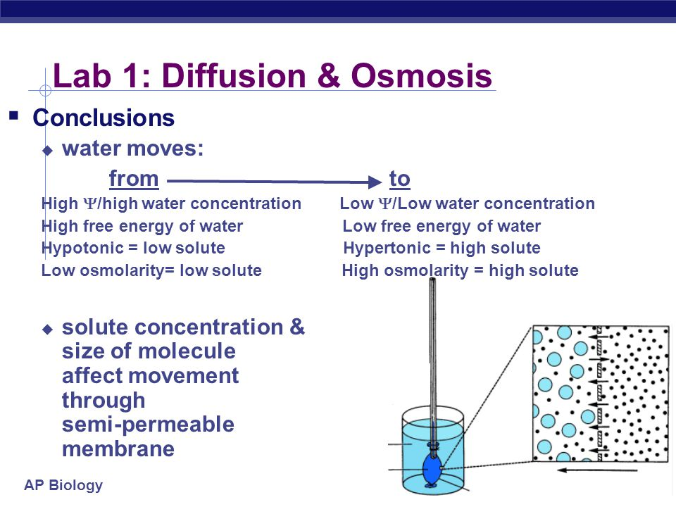determing the osmolarity of a potato You will also learn how to calculate water potential  determining the water potential of potato  potential that is equal to the potato tissue water potential.