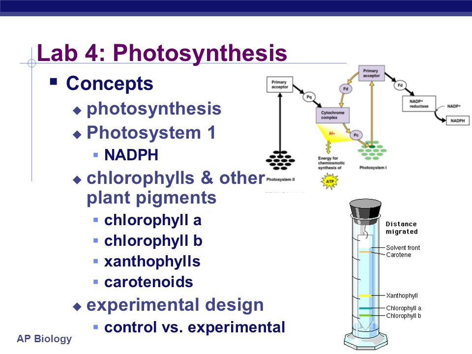 Lab 4: Photosynthesis Concepts photosynthesis Photosystem 1